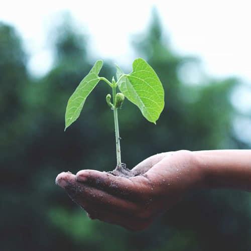 Gartenarbeit als Integrationsprojekt